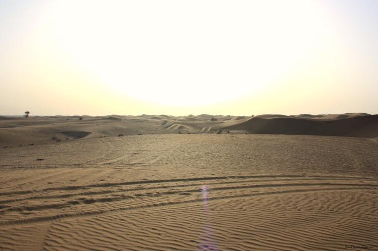 Fleur du désert - The French Odyssée - Al Qudra